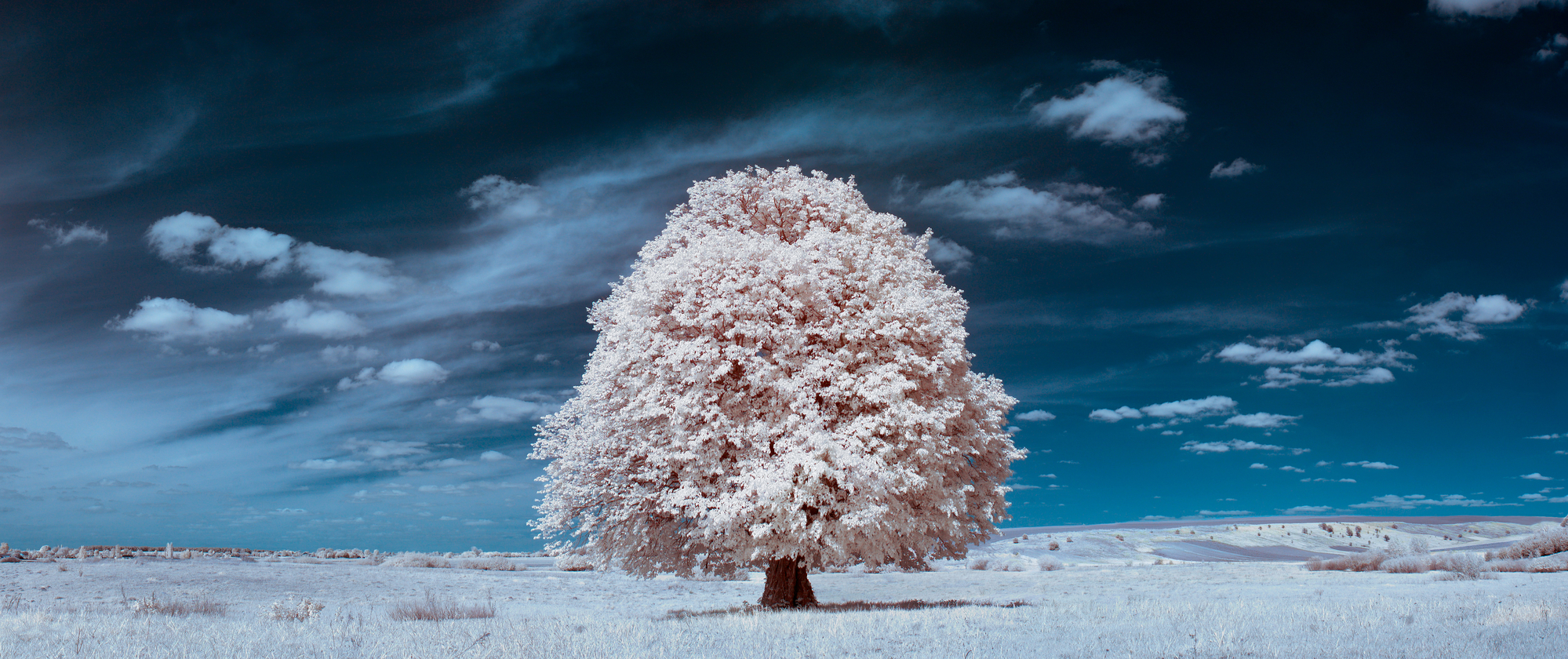 What Is Infrared Photography: Examples, Tips & Tricks